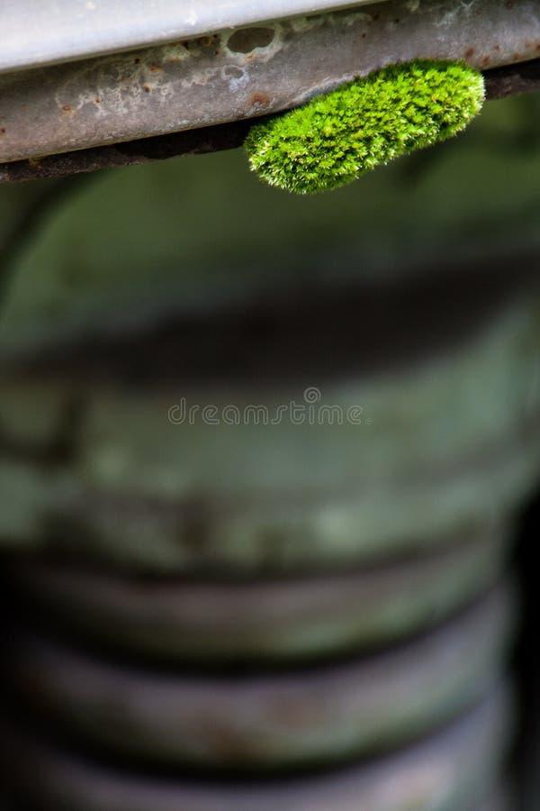 Liten grön mossarugge som växer på maskineri arkivfoto