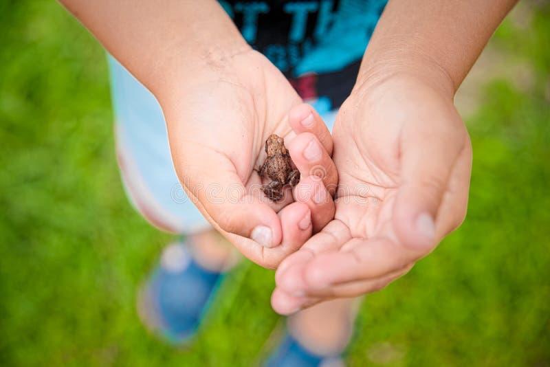 Liten groda i gömma i handflatan av ett barn som lär från naturen, begrepp fotografering för bildbyråer