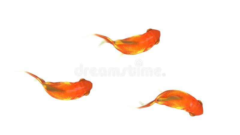 Liten guldfisk tre vektor illustrationer