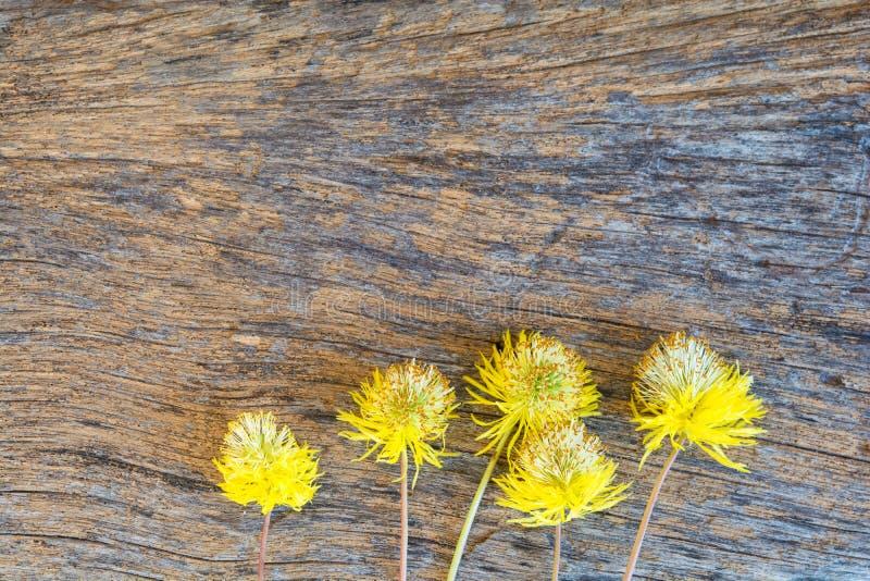 Liten guling blommar på gammalt trä arkivfoto