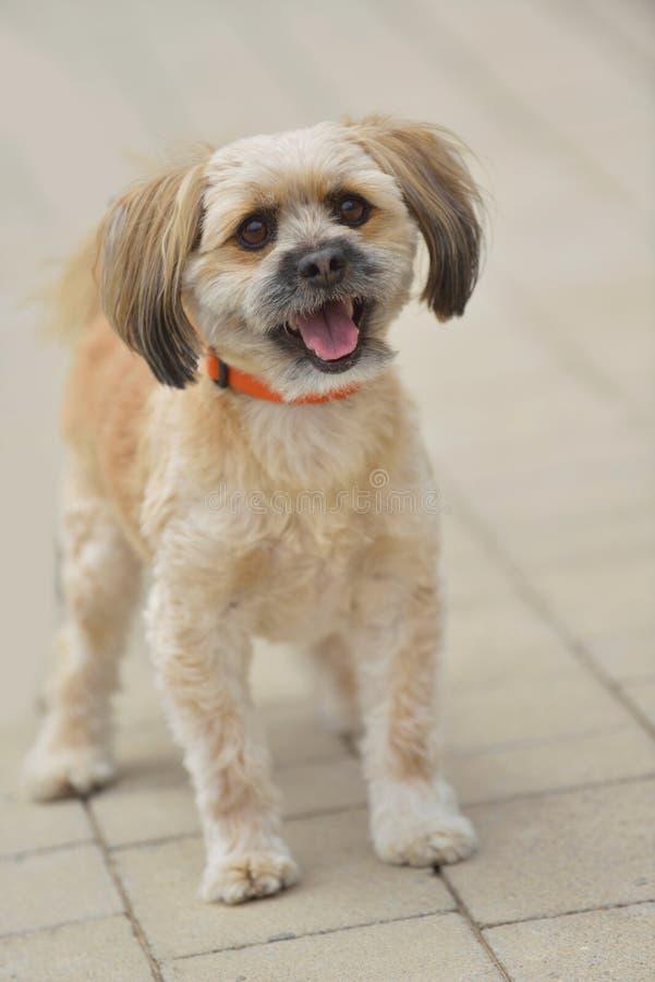 Liten gullig hund royaltyfri fotografi