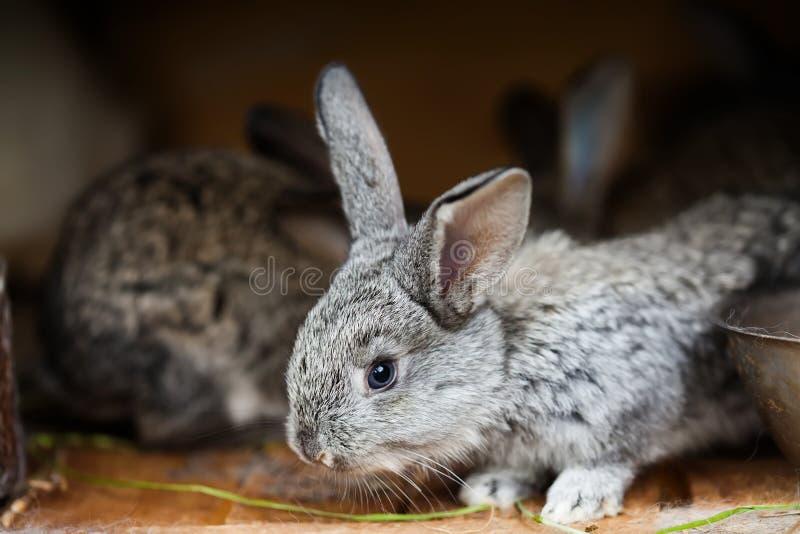 Liten gullig kanin Fluffig grå kanin på träbakgrund Mjuk fokus, grunt djup av fältet arkivfoto