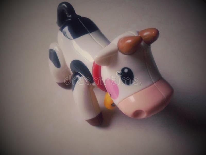 Liten gullig ko som namnges Tolo arkivbild
