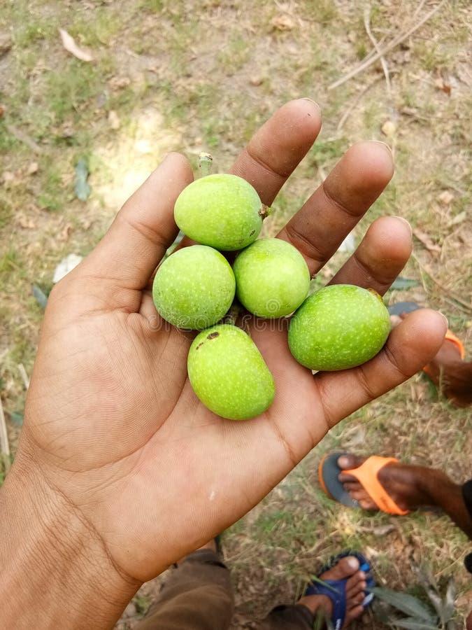 Liten gullig mango arkivfoto