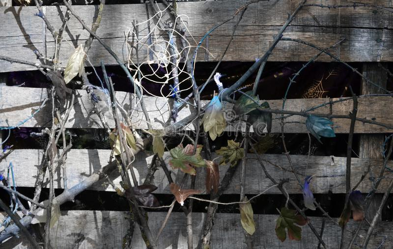 Liten häxa, en flicka i en häxadräkt, flicka som kläs som en häxa i skogen med hatten, halloween arkivbild