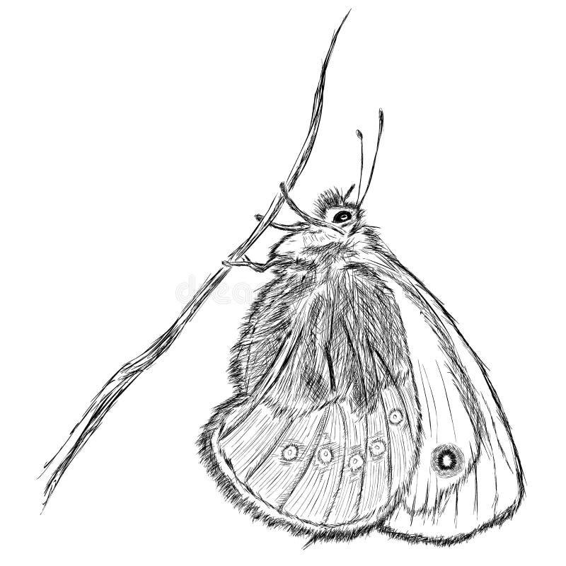 Liten hed (den Coenonympha pamphilusen) royaltyfri illustrationer
