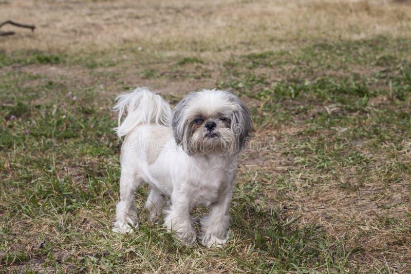 liten hund royaltyfri bild