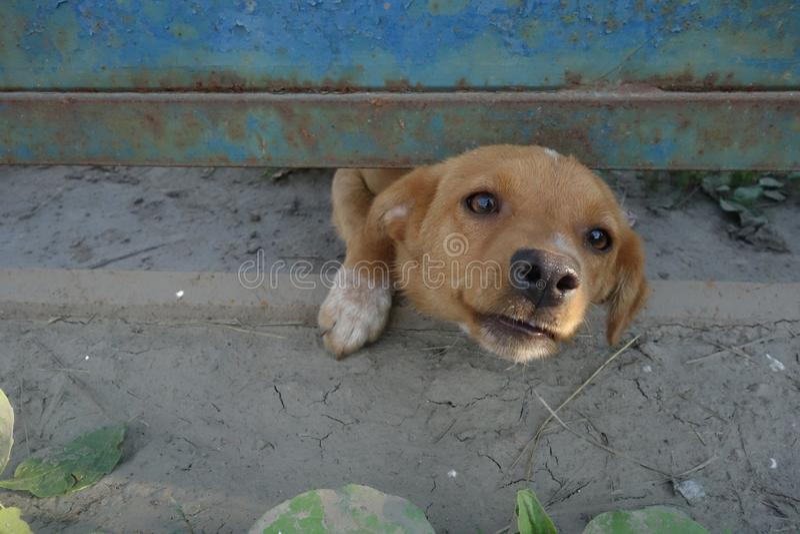 Liten hund som underifrån ser porten arkivfoton