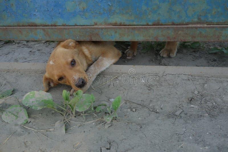 Liten hund som underifrån ser porten royaltyfri bild