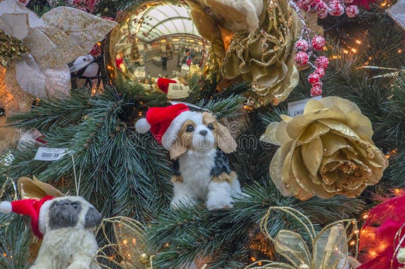 Liten hundkapplöpning i en julgran på Amsterdam Nederländerna 2018 arkivbilder