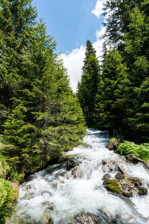 Liten idyllisk bergström i mitt av en pinjeskog i de schweiziska fjällängarna arkivfoto