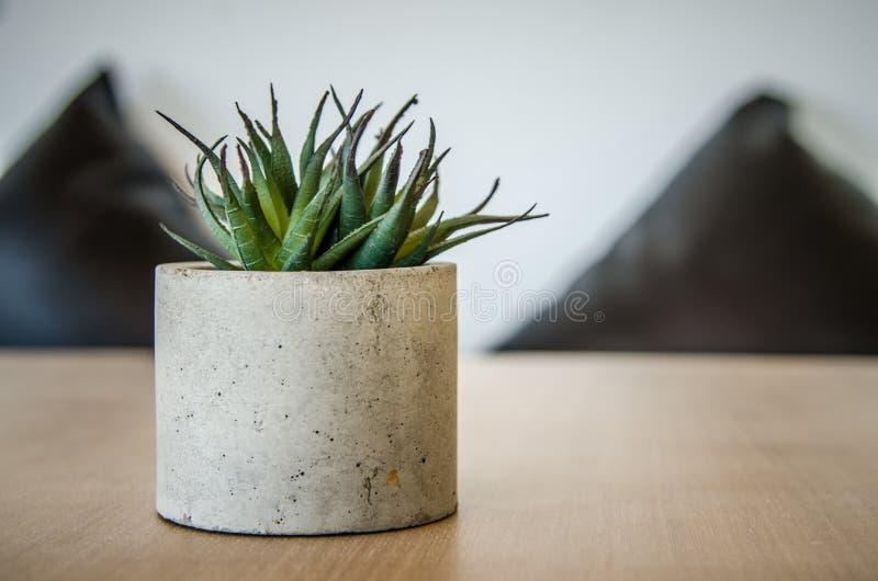 Liten kaktus i en kruka på tabellen för hem- garneringar arkivfoton