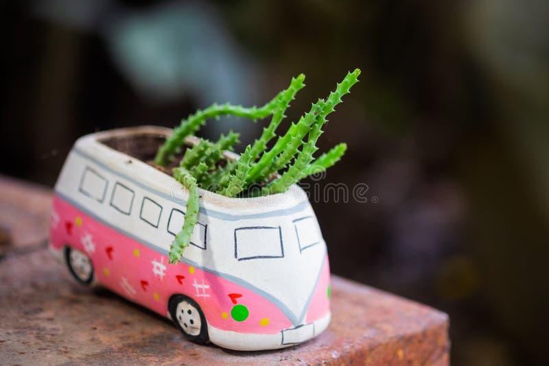 Liten kaktus i lerakrukan royaltyfri fotografi