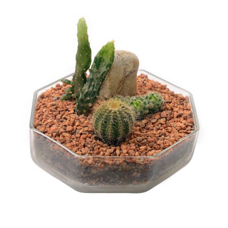 Liten kaktusträdgård royaltyfria bilder