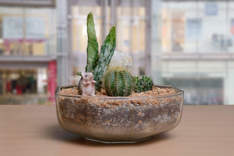 Liten kaktusträdgård på tabellen nära fönster royaltyfri foto
