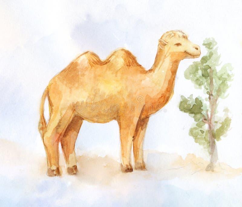 Liten kamel som äter den lilla busken i öken stock illustrationer