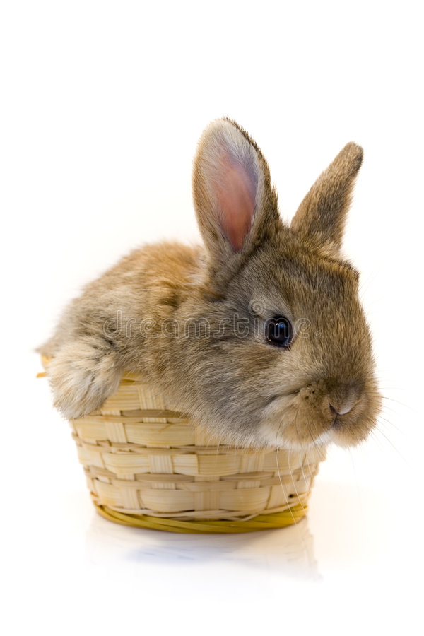 liten kanin royaltyfria bilder