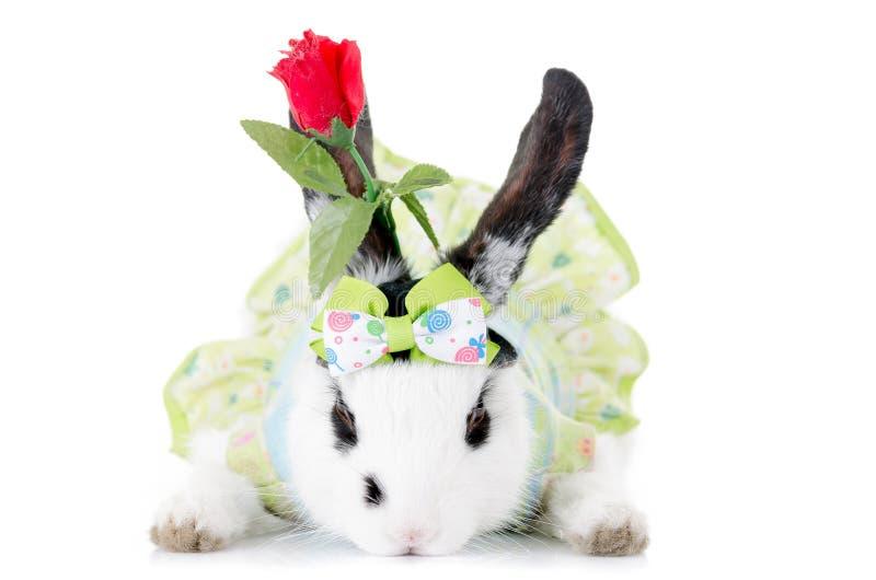 Liten kanin I EN KLÄNNING med blomman arkivbild