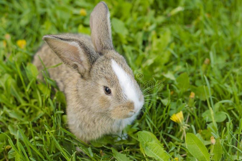 Liten kanin i grönt gräs Kanin i ängen royaltyfri fotografi