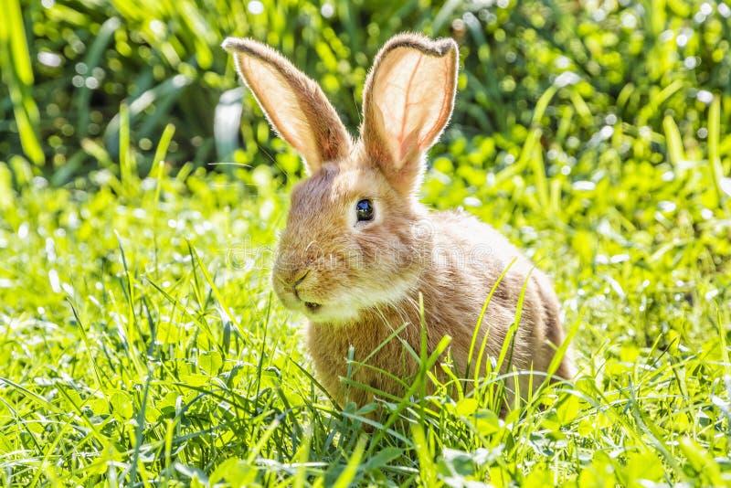 Liten kanin i grönt gräs, påsktid arkivbild