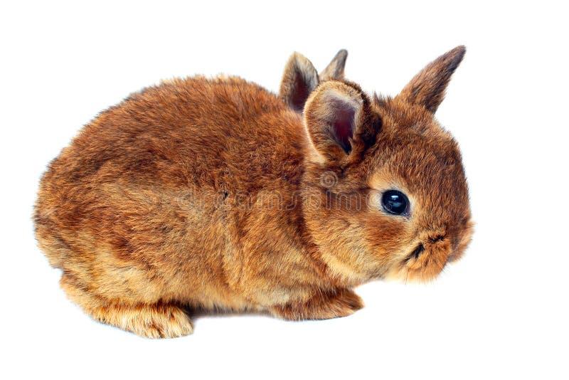 Liten kanin på vit bakgrund royaltyfri fotografi