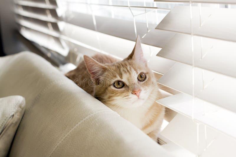 liten katt royaltyfria foton