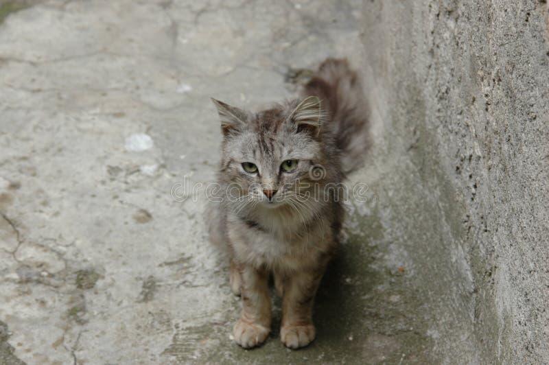 liten katt royaltyfri bild