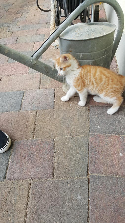 liten katt royaltyfri fotografi