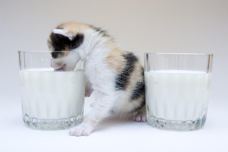 liten katt arkivbild