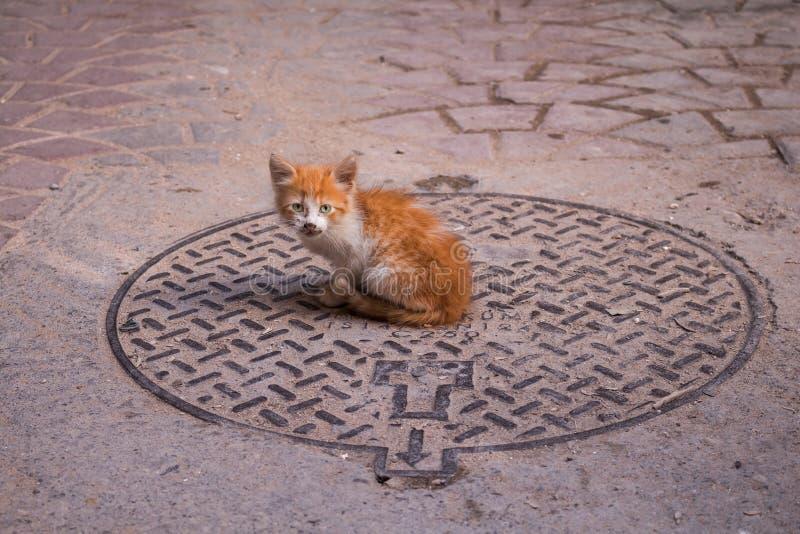 Liten katt på en kanal, Safi, Marocko royaltyfri bild