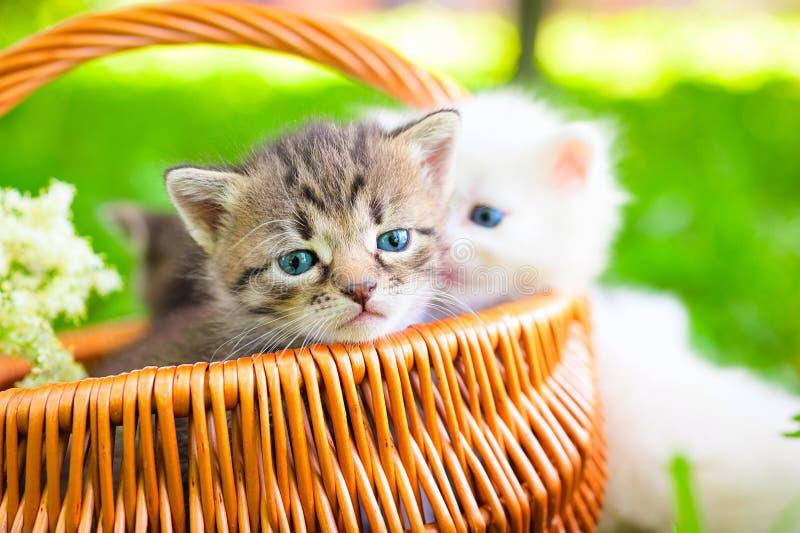 Liten katt på gräs royaltyfria bilder