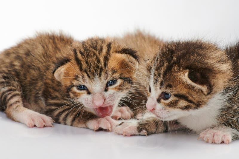 Liten kattgrupp arkivfoton