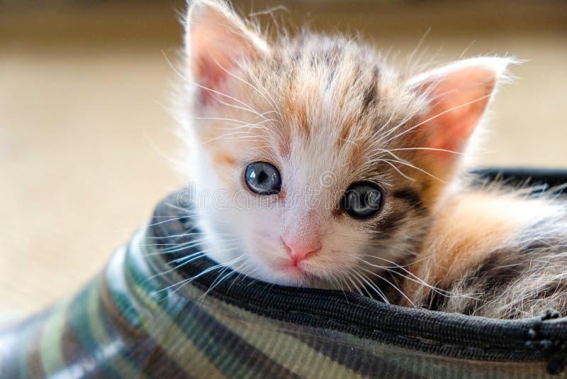 Liten kattunge i skon fotografering för bildbyråer