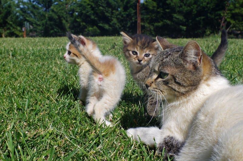 Liten kattunge med deras mammakatt på gräset av trädgården royaltyfri bild