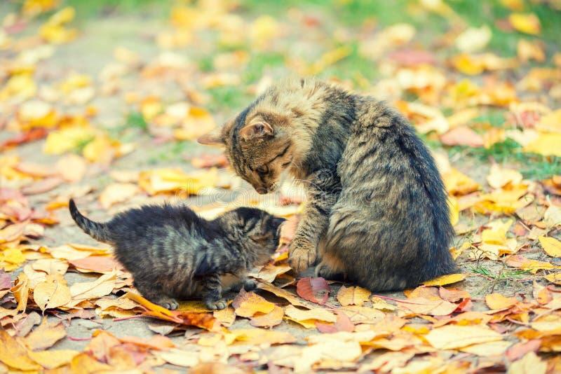 Liten kattunge med moderkatten i en trädgård royaltyfri fotografi