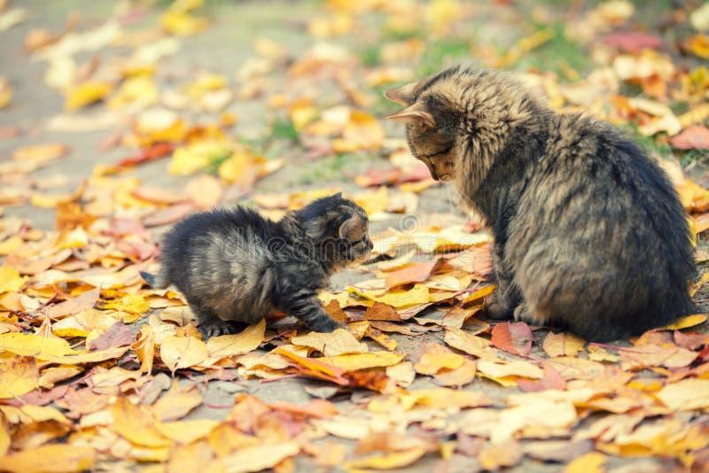 Liten kattunge med moderkatten i en tr?dg?rd royaltyfri fotografi