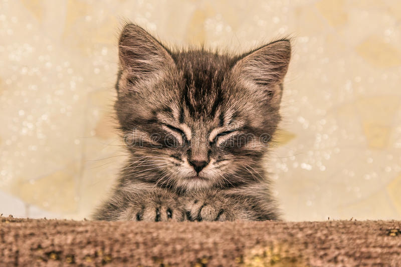 Liten kattunge som ligger på soffan arkivfoton