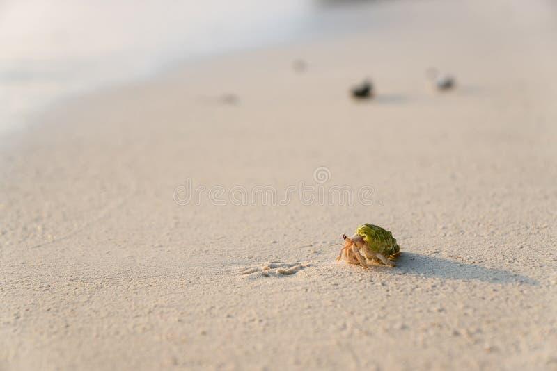 liten krabba arkivfoton