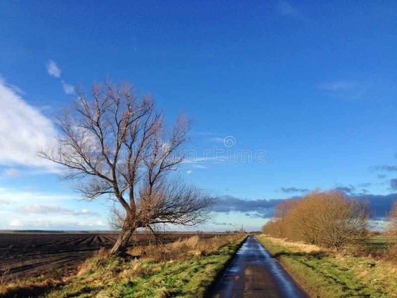 Liten landsväg med fält, kala träd och öppen himmel i Lincolnshire fotografering för bildbyråer