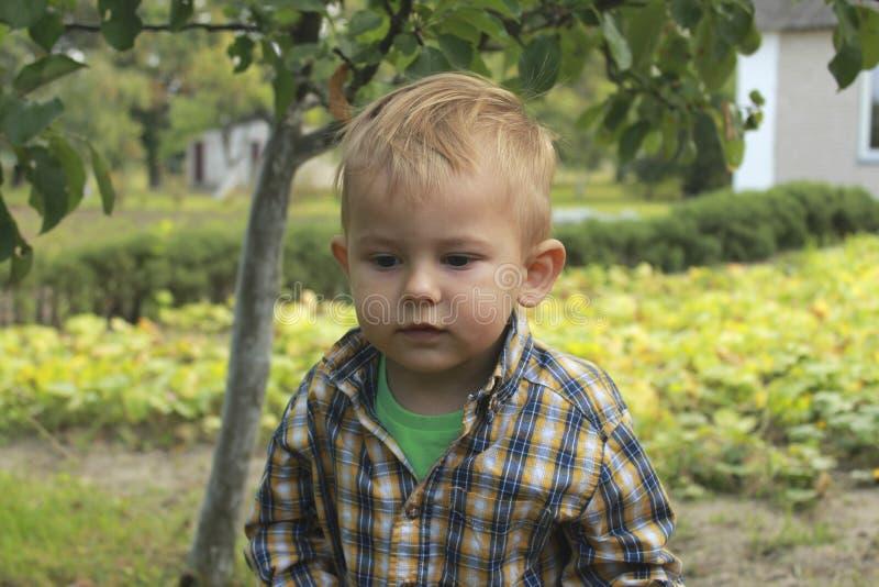 Liten litet barnpojke i fruktträdgård arkivbilder