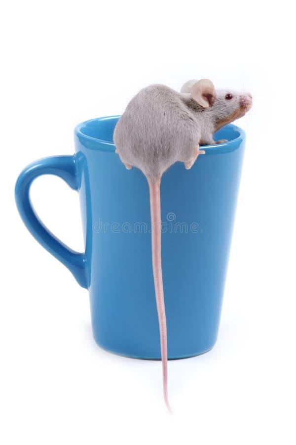 liten mus royaltyfri fotografi