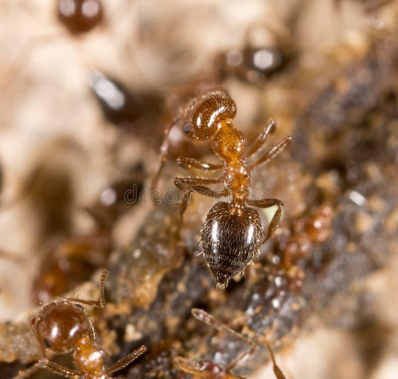 Liten myra i natur Makro royaltyfri fotografi