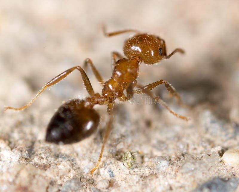 Liten myra i natur Makro royaltyfria bilder