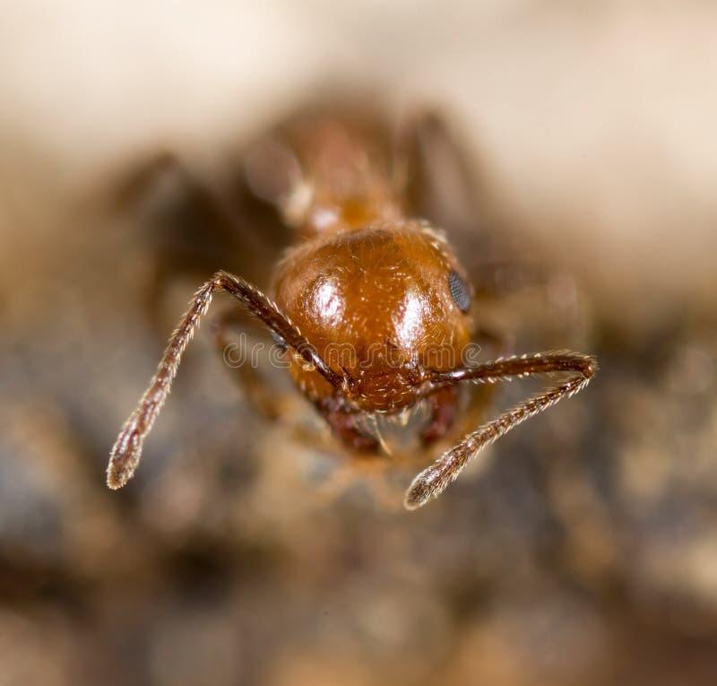 Liten myra i natur Makro royaltyfri foto