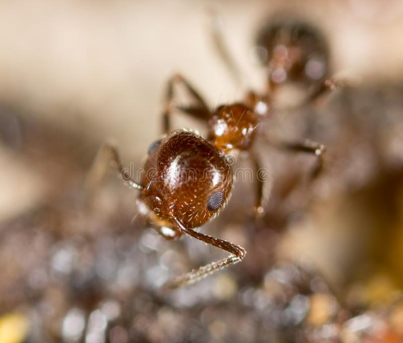 Liten myra i natur Makro arkivfoto