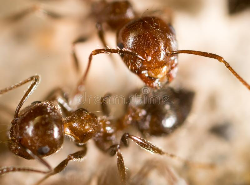Liten myra i natur Makro royaltyfria foton