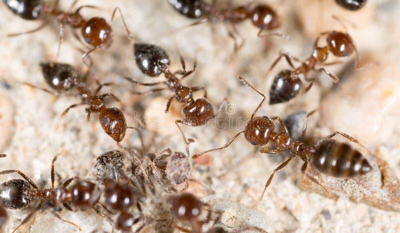 Liten myra i natur Makro royaltyfri bild