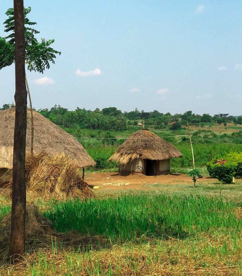 Liten och nätt kojor i Uganda royaltyfria bilder