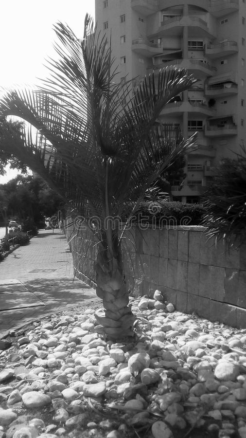 Liten palmträd i stad fotografering för bildbyråer