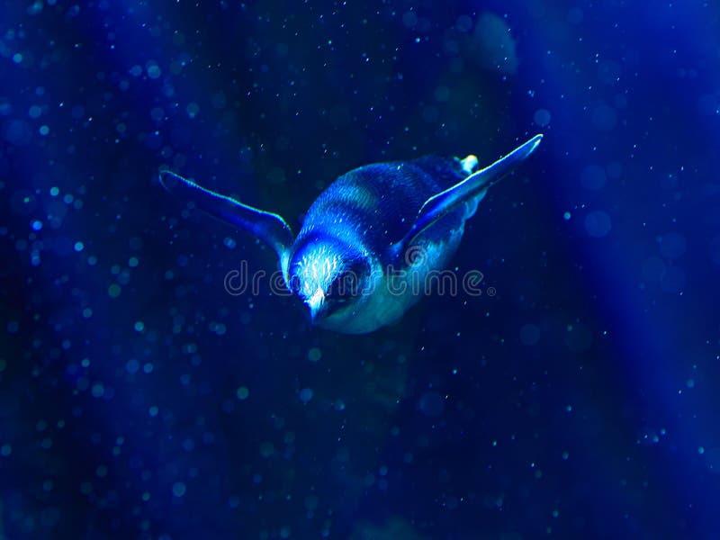 Liten pingvin i djupt vatten royaltyfria foton